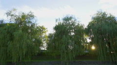 Sun is shining through the leaves on the trees Stock Footage