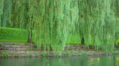 Beautiful green trees and parks on the river bank Stock Footage