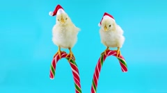 Two cute young roosters in Santa hats, sitting on the candy cane Stock Footage