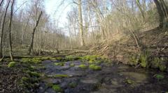 Stream creek flow through a dense woodland. 4K Stock Footage