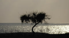 Silhouette of a tree against the sea, Cyprus Stock Footage