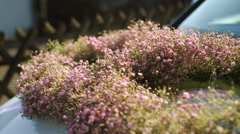 Wreathes of tiny pink flowers lie on the hood Stock Footage