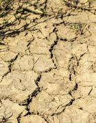 Very dry land without any rain. Stock Photos