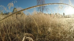 Walking amongst tall golden grass straw covered in frost and rime Stock Footage