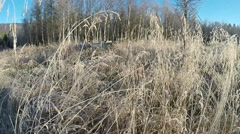 Wandering close to ice and frost covered grass on field in autumn sunshine slow  Stock Footage