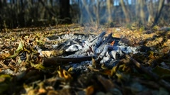 Bonfire in the forest - Time Lapse Stock Footage