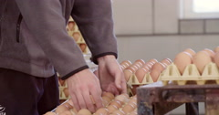 Boy piling up trays with eggs at conveyor belt Stock Footage