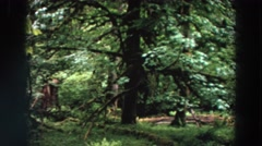 1964: large space with tall masses of huge vegetation WASHINGTON Stock Footage