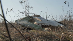 Animal skull lying in the grass Stock Footage