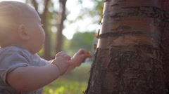 Small child touches the tree. Close-up. Tears bark and tries to eat it Stock Footage