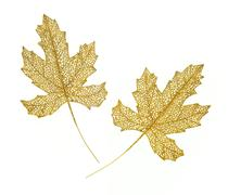 Golden leaves Stock Photos