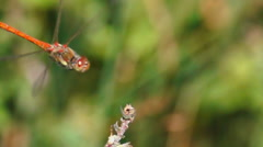 Beautiful dragonfly landing approach Stock Footage