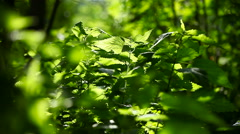 Green nettle. Natural sunny summer background Stock Footage