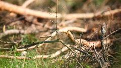 Natural summer background - dragonfly sits on tree's branch Stock Footage