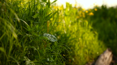 Natural summer background - green grass swaying in the wind. Sunny day in forest Stock Footage