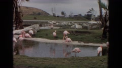 1974: a day in the life of the pink flamingos. IRVINE CALIFORNIA Stock Footage