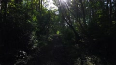 Running through the woods with sun glare. Stock Footage