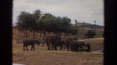 1974: herd of elephants with parents and calves stand together, eating IRVINE Stock Footage