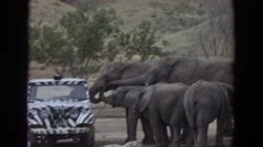 1974: elephants meets humans IRVINE CALIFORNIA Stock Footage