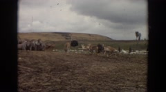 1974: exotic animals at a watering hole on safari. IRVINE CALIFORNIA Stock Footage