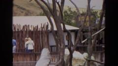 1974: monkeys in a tree watch as groups of people walk past a village  Stock Footage