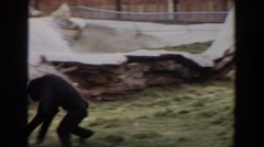 1974: two apes are playing near to a rock on the meadow IRVINE CALIFORNIA Stock Footage