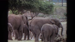 1974: family of elephants core IRVINE CALIFORNIA Stock Footage