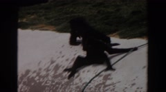 1974: monkeys playing outside. IRVINE CALIFORNIA Stock Footage