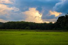 Simple rice farm Stock Photos