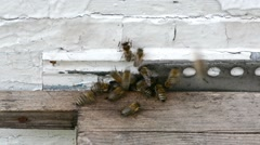 Honey bees swarming and flying around their beehive Stock Footage