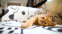 Cute ginger kitty comfortably snuggles on blanket in bed. Cozy morning at home Stock Footage