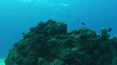Fish swim through rocky coral structure Stock Footage