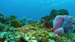 Colorful coral tableaux Stock Footage