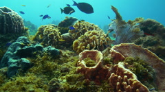 Tropical fish swim through colorful coral Stock Footage