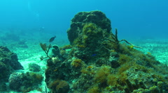 Camera pass through two coral structures with diver in background Stock Footage
