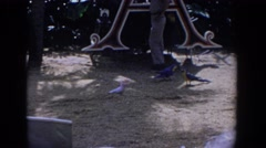 1958: exotic birds walking around on the ground at a park FLORIDA Stock Footage