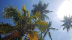 Tropical palms in sunrise with sun rays and thick morning fog, sri lanka Stock Footage