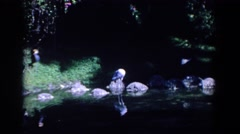 1958: elegant birds and waterfowl preening themselves on rocks at the creekside Stock Footage