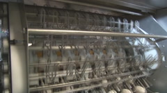 Automated sorting of raw and fresh chicken eggs Stock Footage