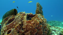 Yellow and black tropical fish dart through coral Stock Footage