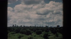 1958: cloudy sky over field of evergreen trees SOUTH CAROLINA Stock Footage