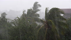 Torrential rain and high winds blowing coconut trees  Stock Footage