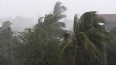 Torrential rain and high winds blowing coconut trees ( time lapse) Stock Footage