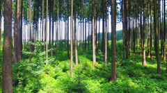 Forest beautiful picturesque pristine green wood backward motion trees sunny day Stock Footage