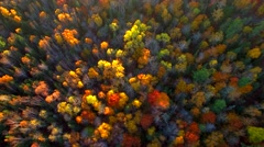 Amazing Autumn scenery, forests with Fall colors Stock Footage