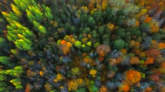Amazing Autumn scenery, forests with Fall colors, Aerial view Stock Footage