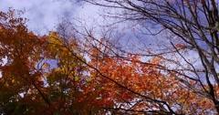 4K stunning vivid fall colors Stock Footage
