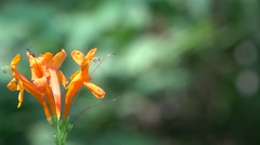 Beautiful Bunch of Orange Flowers with Bokeh Background 4K Stock Footage