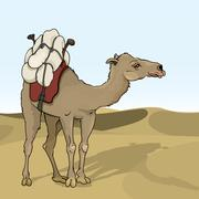 Camel Piirros
