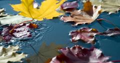 Autumn Leaf Fall 4K Stock Footage